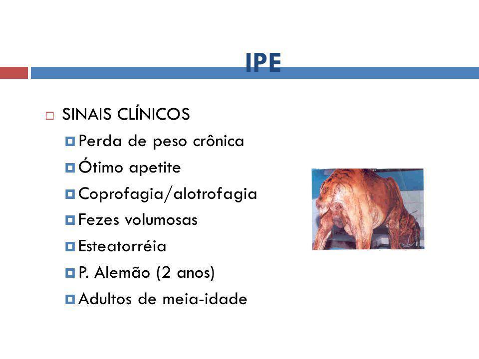 IPE  SINAIS CLÍNICOS  Perda de peso crônica  Ótimo apetite  Coprofagia/alotrofagia  Fezes volumosas  Esteatorréia  P. Alemão (2 anos)  Adultos