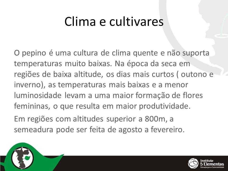 Clima e cultivares O pepino é uma cultura de clima quente e não suporta temperaturas muito baixas.