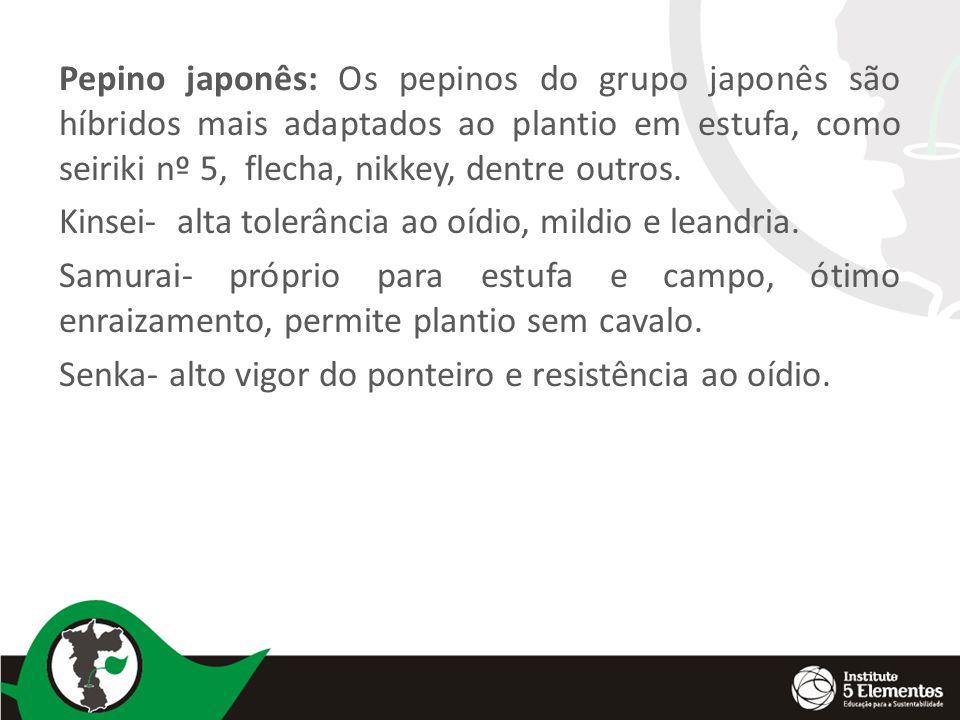 Pepino japonês: Os pepinos do grupo japonês são híbridos mais adaptados ao plantio em estufa, como seiriki nº 5, flecha, nikkey, dentre outros.