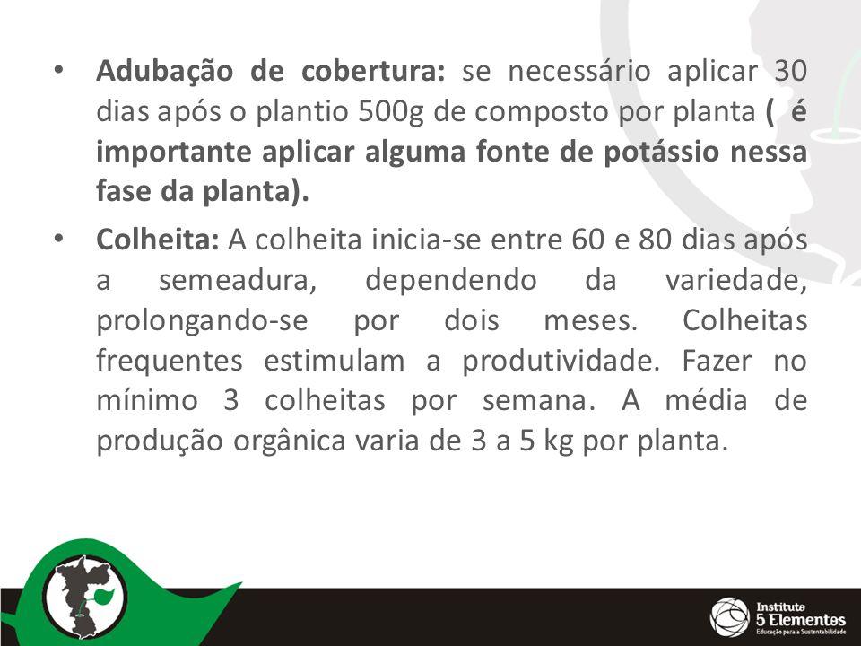 Adubação de cobertura: se necessário aplicar 30 dias após o plantio 500g de composto por planta ( é importante aplicar alguma fonte de potássio nessa fase da planta).