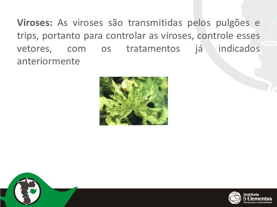 Viroses: As viroses são transmitidas pelos pulgões e trips, portanto para controlar as viroses, controle esses vetores, com os tratamentos já indicados anteriormente