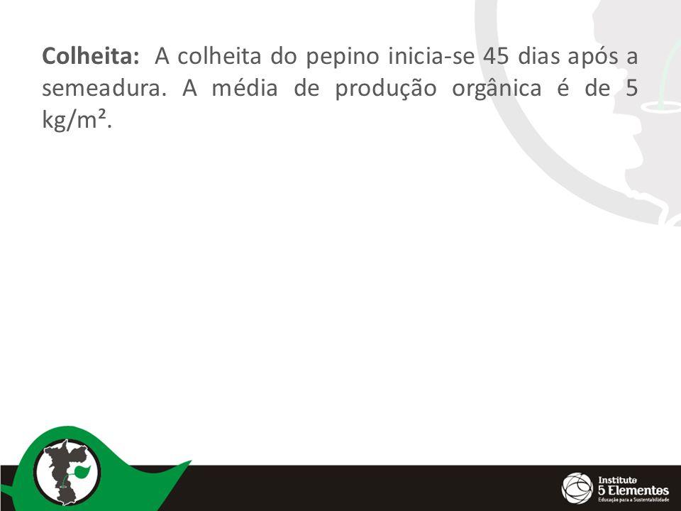 Colheita: A colheita do pepino inicia-se 45 dias após a semeadura.