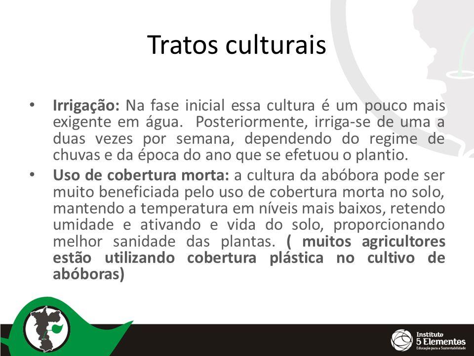 Tratos culturais Irrigação: Na fase inicial essa cultura é um pouco mais exigente em água.