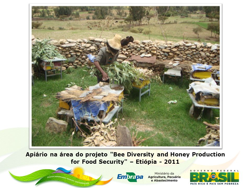 Apiário na área do projeto Bee Diversity and Honey Production for Food Security – Etiópia - 2011