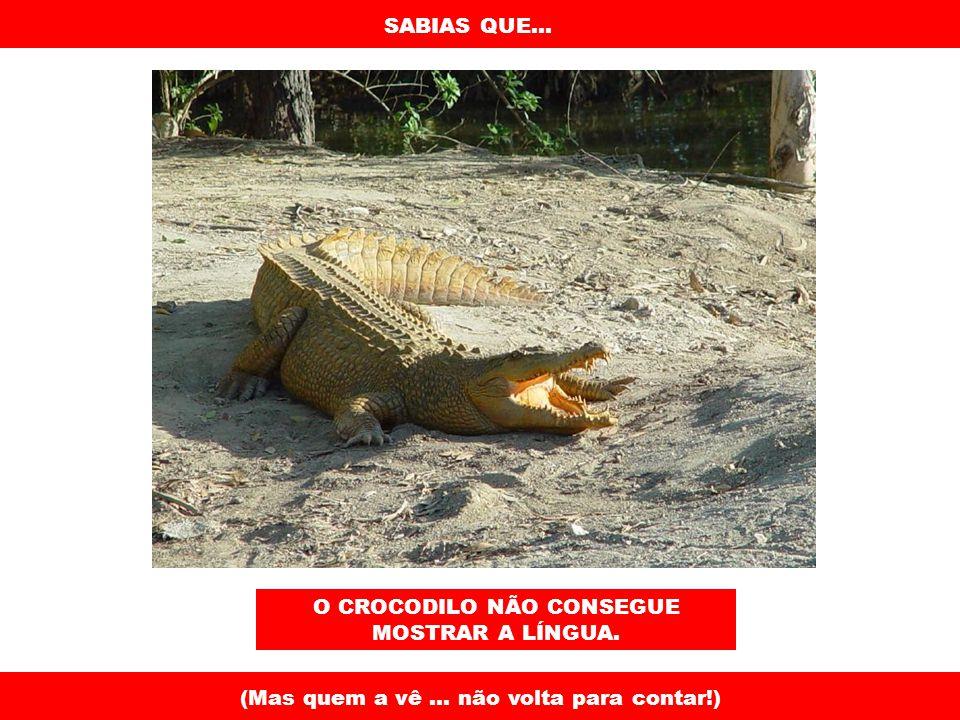 SABIAS QUE... O CROCODILO NÃO CONSEGUE MOSTRAR A LÍNGUA. (Mas quem a vê... não volta para contar!)