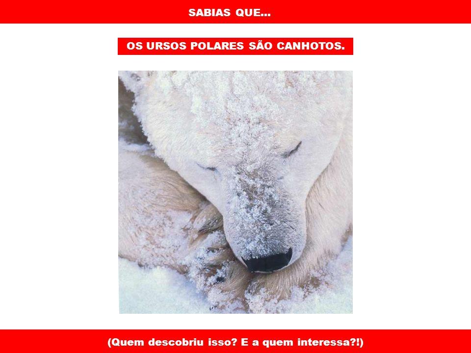 SABIAS QUE... OS URSOS POLARES SÃO CANHOTOS. (Quem descobriu isso? E a quem interessa?!)