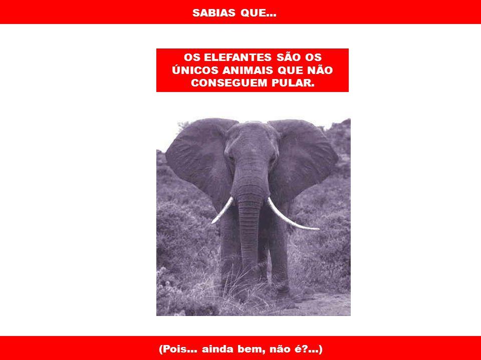 SABIAS QUE...OS ELEFANTES SÃO OS ÚNICOS ANIMAIS QUE NÃO CONSEGUEM PULAR.