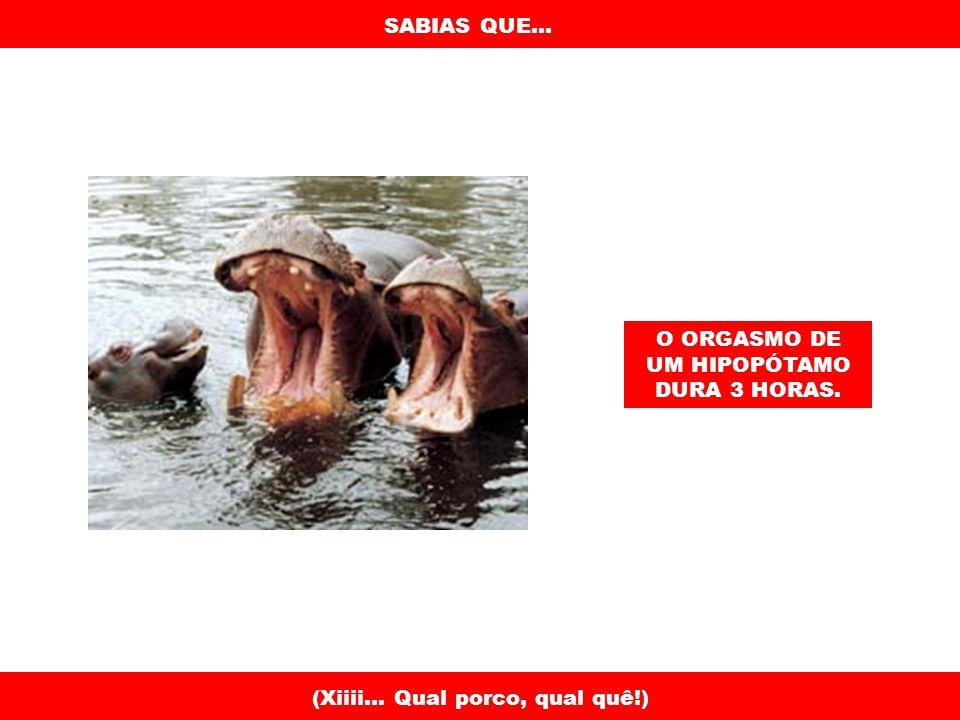 SABIAS QUE...BATER COM A CABEÇA CONTRA A PAREDE CONSOME 150 CALORIAS POR HORA.