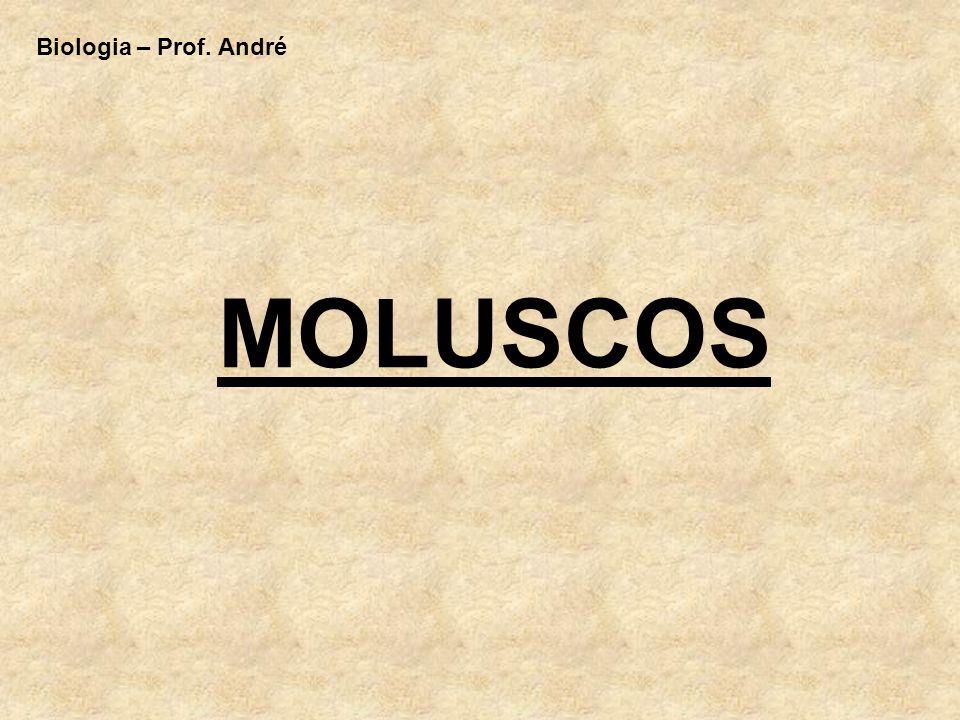 A) Características Gerais: - Animais de Corpo Mole – com ou sem concha - Triblásticos - Protostômios - Celomados - Corpos Dividido em Cabeça, Pé e Massa Visceral - Atenção : Corpo Não Segmentado