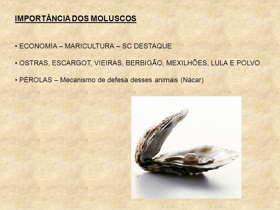 IMPORTÂNCIA DOS MOLUSCOS ECONOMIA – MARICULTURA – SC DESTAQUE OSTRAS, ESCARGOT, VIEIRAS, BERBIGÃO, MEXILHÕES, LULA E POLVO. PÉROLAS – Mecanismo de def