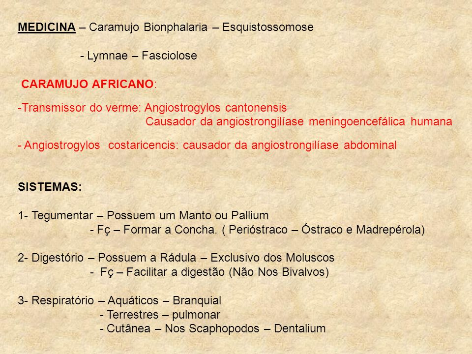 MEDICINA – Caramujo Bionphalaria – Esquistossomose - Lymnae – Fasciolose CARAMUJO AFRICANO: -Transmissor do verme: Angiostrogylos cantonensis Causador