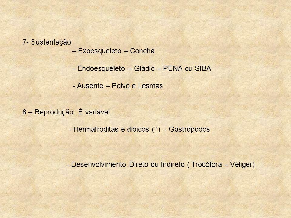 7- Sustentação: – Exoesqueleto – Concha - Endoesqueleto – Gládio – PENA ou SIBA - Ausente – Polvo e Lesmas 8 – Reprodução: É variável - Hermafroditas
