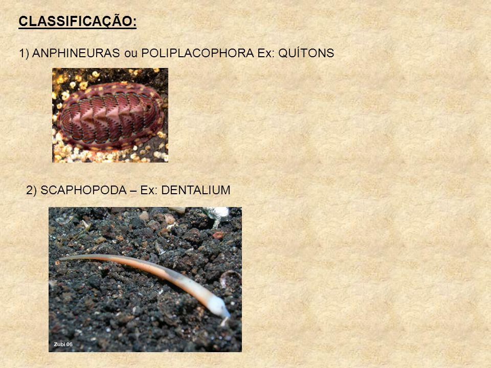 CLASSIFICAÇÃO: 1) ANPHINEURAS ou POLIPLACOPHORA Ex: QUÍTONS 2) SCAPHOPODA – Ex: DENTALIUM
