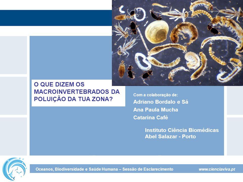 www.cienciaviva.pt Oceanos, Biodiversidade e Saúde Humana – Sessão de Esclarecimento O que dizem os Macroinvertebrados da poluição da tua zona.