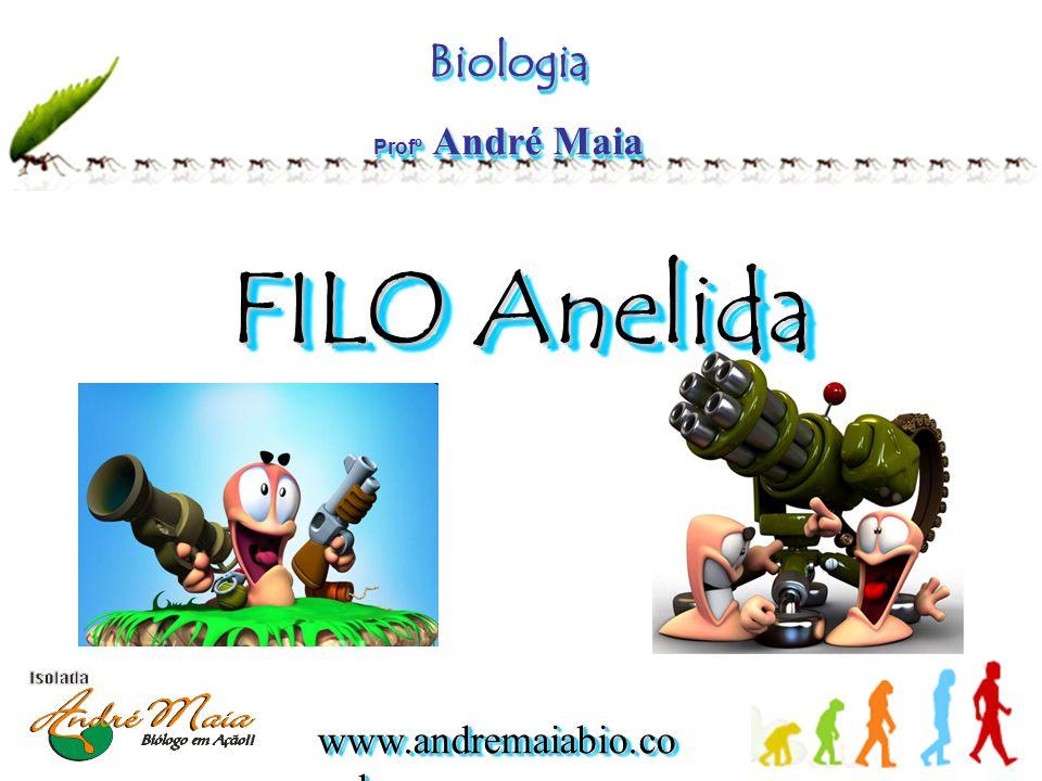 www.andremaiabio.co m.br  Os produtos da excreção são eliminados por meio de estruturas chamadas de nefrídeos.