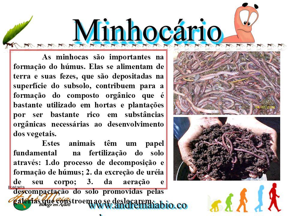 MinhocárioMinhocário As minhocas são importantes na formação do húmus.