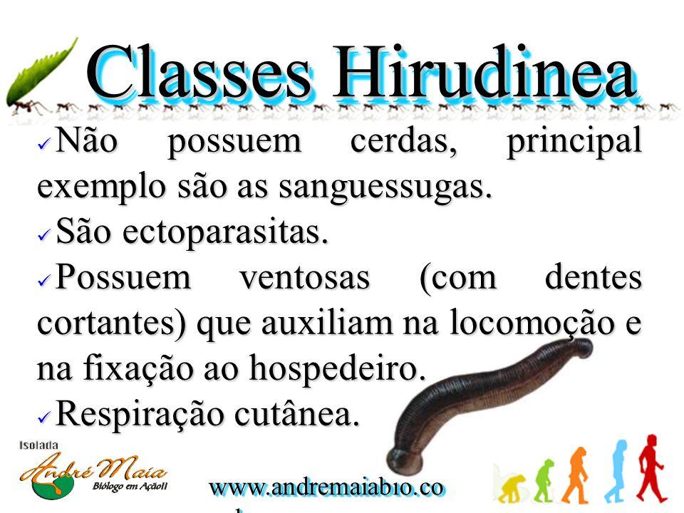 www.andremaiabio.co m.br Classes Hirudinea Não possuem cerdas, principal exemplo são as sanguessugas.