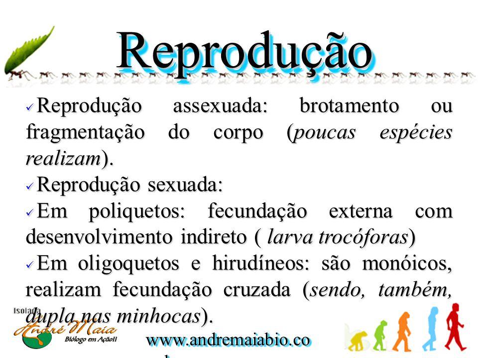 ReproduçãoReprodução Reprodução assexuada: brotamento ou fragmentação do corpo (poucas espécies realizam).