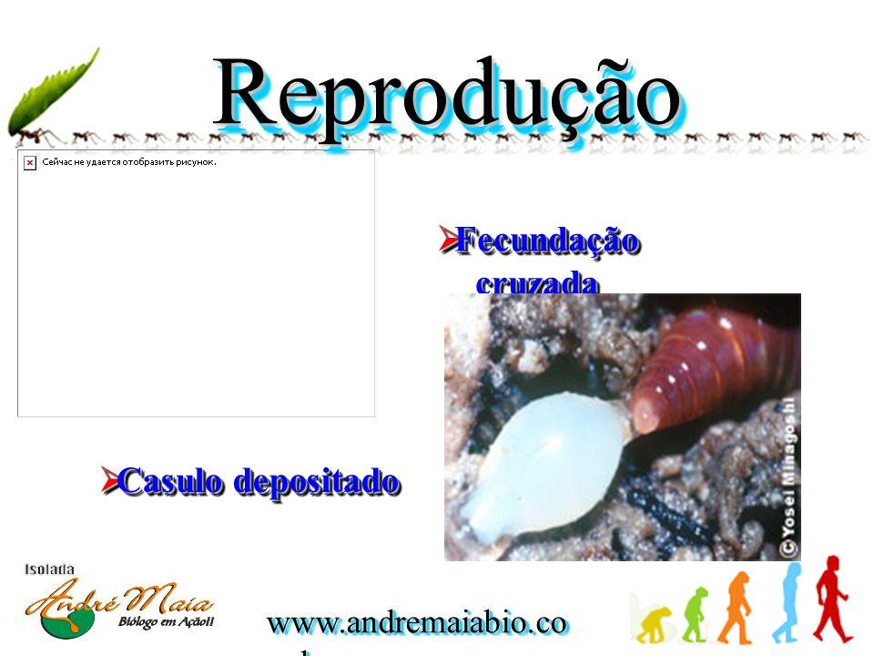  Casulo depositado  Fecundação cruzada ReproduçãoReprodução