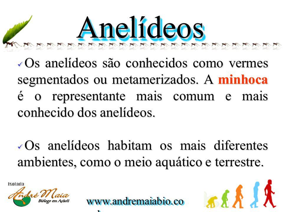 www.andremaiabio.co m.br AnelídeosAnelídeos Os anelídeos são conhecidos como vermes segmentados ou metamerizados.