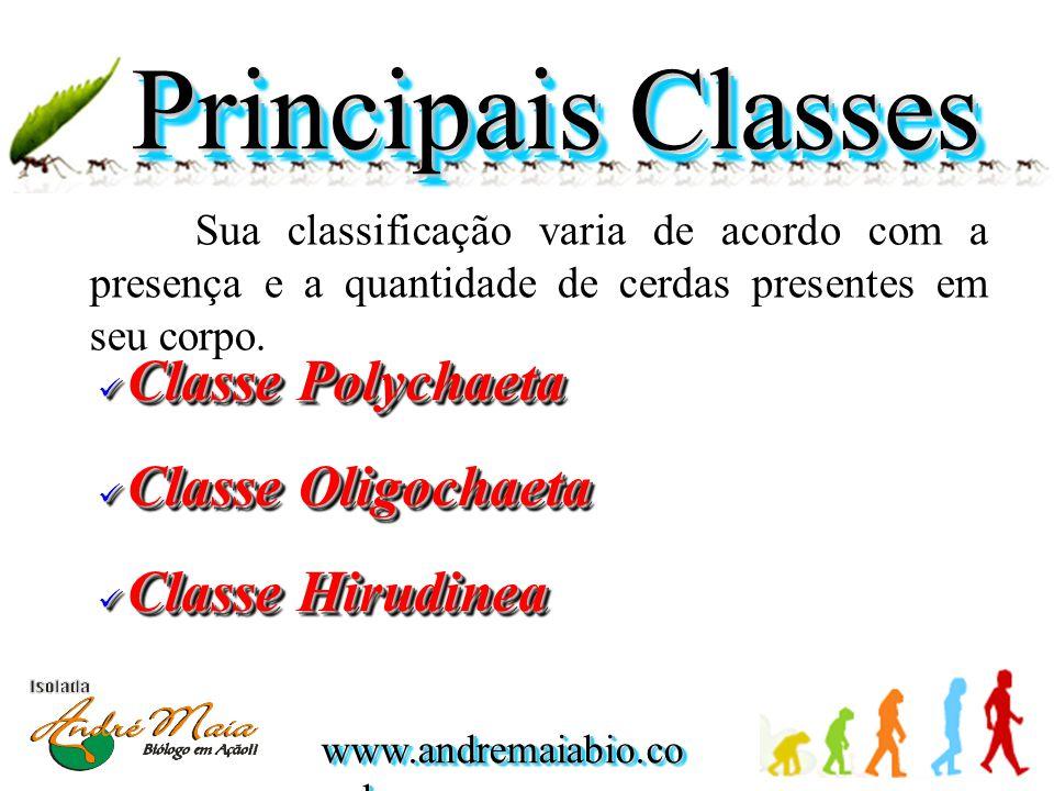 www.andremaiabio.co m.br Principais Classes Sua classificação varia de acordo com a presença e a quantidade de cerdas presentes em seu corpo.