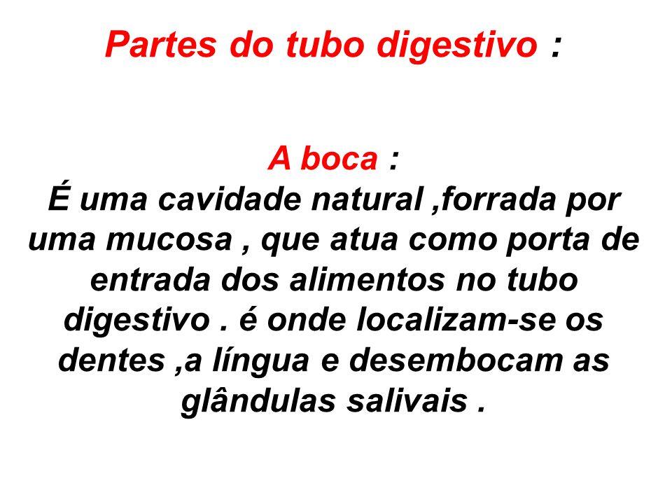 Partes do tubo digestivo : A boca : É uma cavidade natural,forrada por uma mucosa, que atua como porta de entrada dos alimentos no tubo digestivo. é o