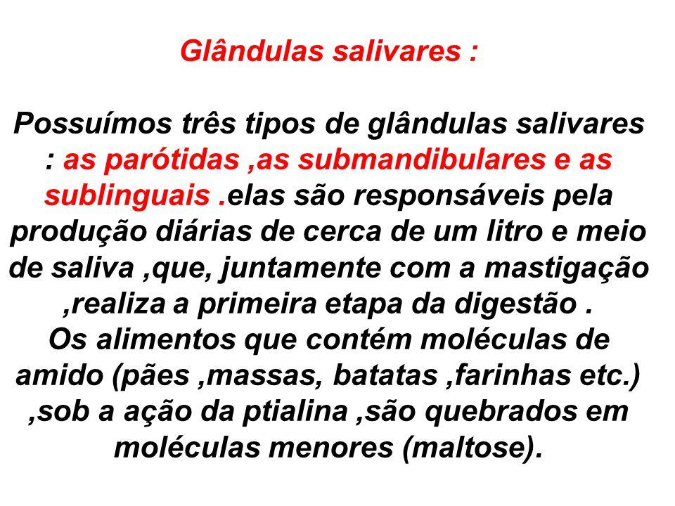 Glândulas salivares : Possuímos três tipos de glândulas salivares : as parótidas,as submandibulares e as sublinguais.elas são responsáveis pela produç