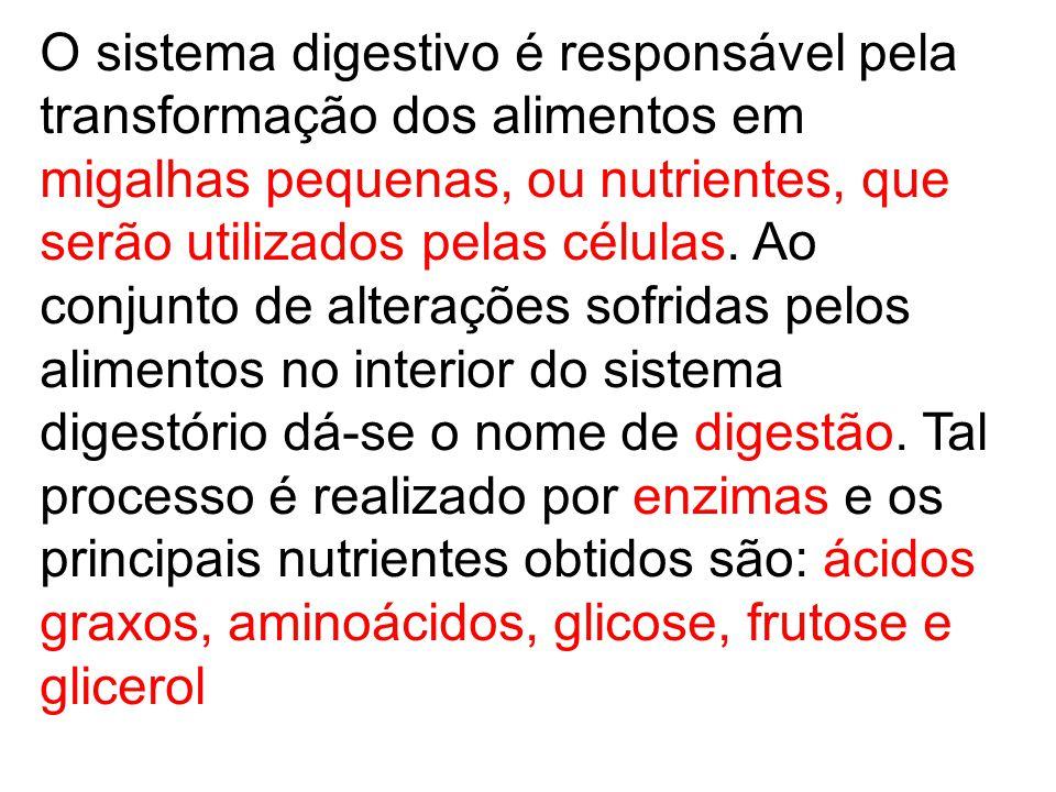 O sistema digestivo é responsável pela transformação dos alimentos em migalhas pequenas, ou nutrientes, que serão utilizados pelas células. Ao conjunt