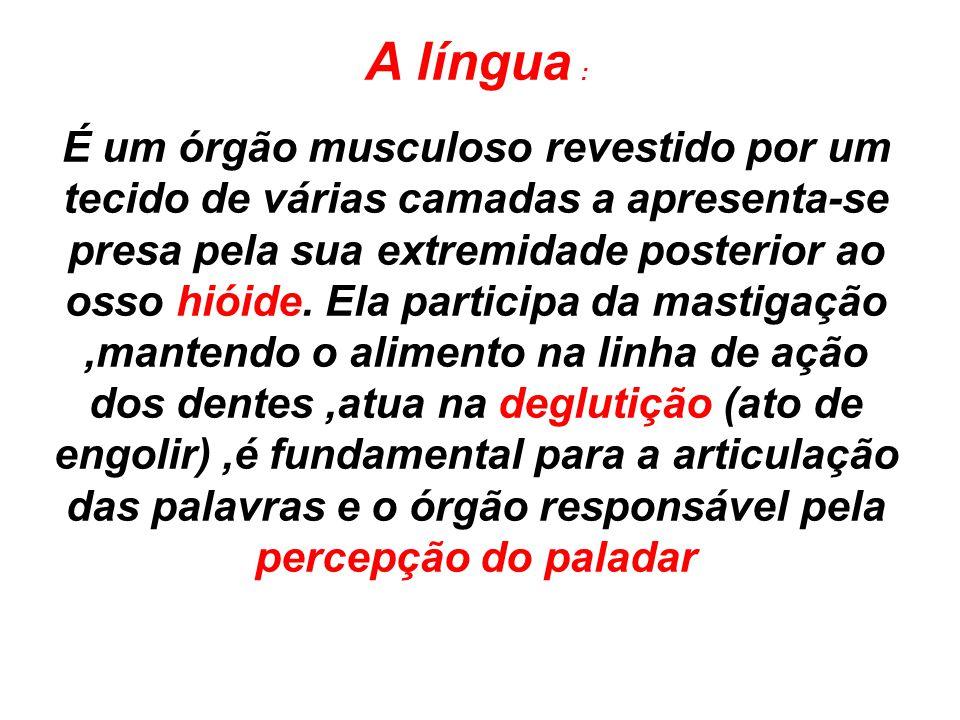 A língua : É um órgão musculoso revestido por um tecido de várias camadas a apresenta-se presa pela sua extremidade posterior ao osso hióide. Ela part