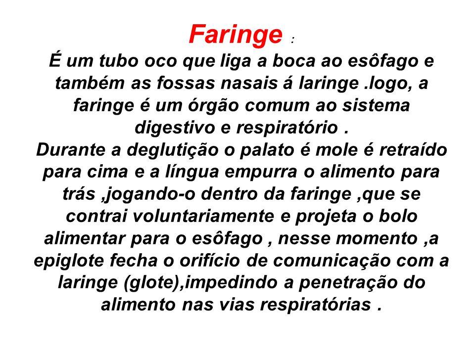 Faringe : É um tubo oco que liga a boca ao esôfago e também as fossas nasais á laringe.logo, a faringe é um órgão comum ao sistema digestivo e respira