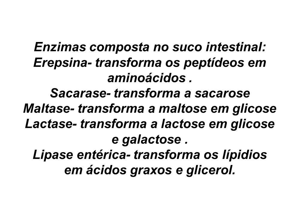Enzimas composta no suco intestinal: Erepsina- transforma os peptídeos em aminoácidos. Sacarase- transforma a sacarose Maltase- transforma a maltose e