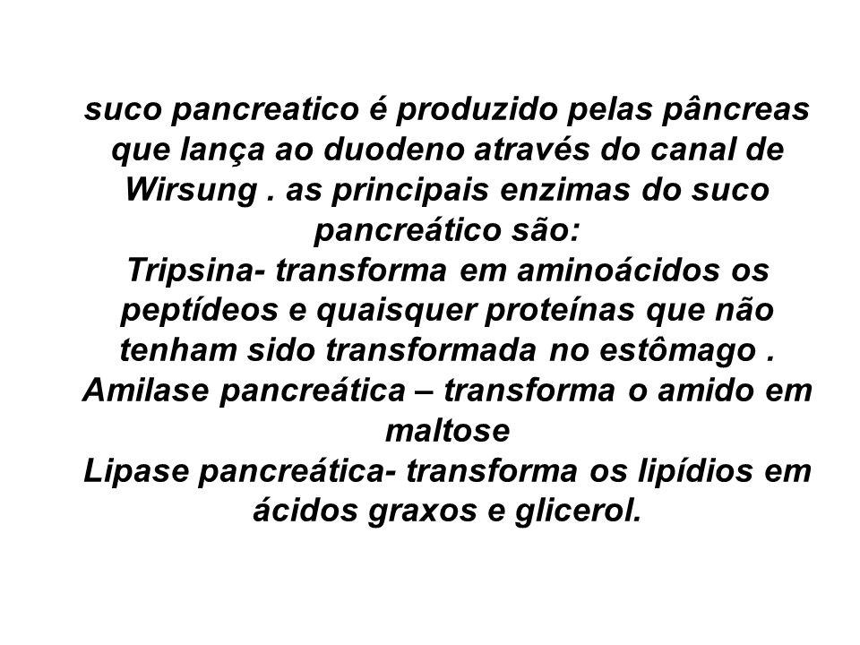 suco pancreatico é produzido pelas pâncreas que lança ao duodeno através do canal de Wirsung. as principais enzimas do suco pancreático são: Tripsina-