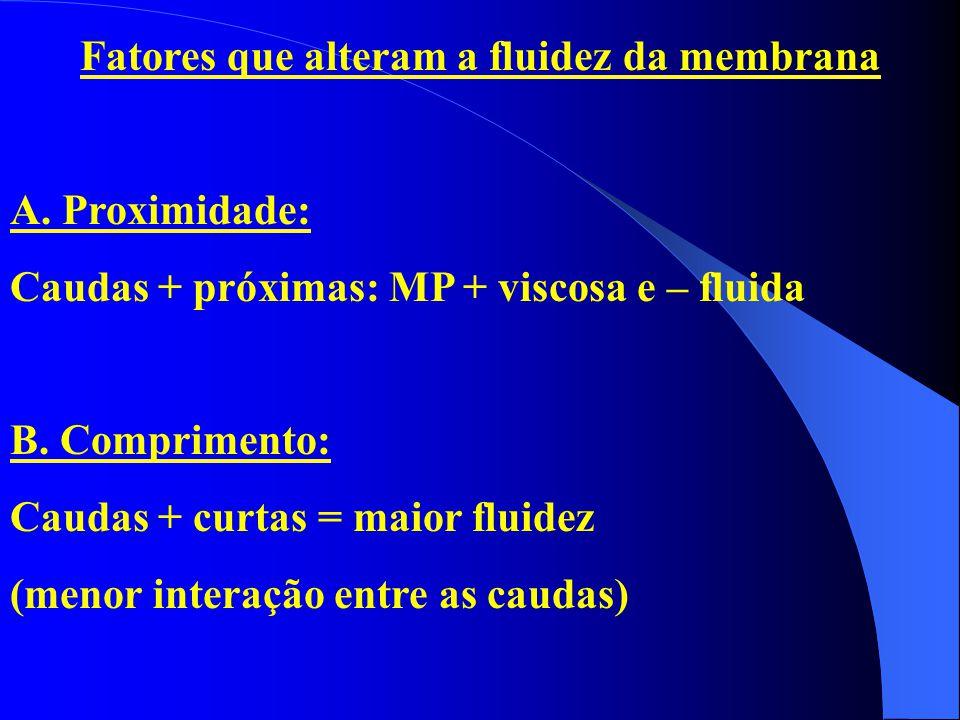 Fatores que alteram a fluidez da membrana A. Proximidade: Caudas + próximas: MP + viscosa e – fluida B. Comprimento: Caudas + curtas = maior fluidez (