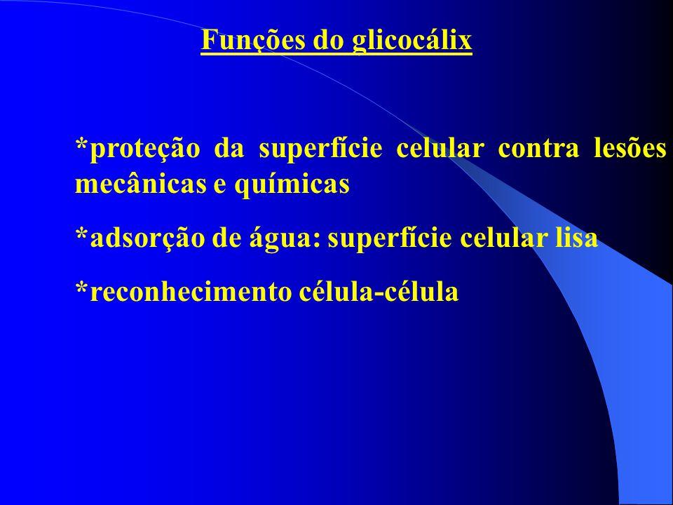Funções do glicocálix *proteção da superfície celular contra lesões mecânicas e químicas *adsorção de água: superfície celular lisa *reconhecimento cé