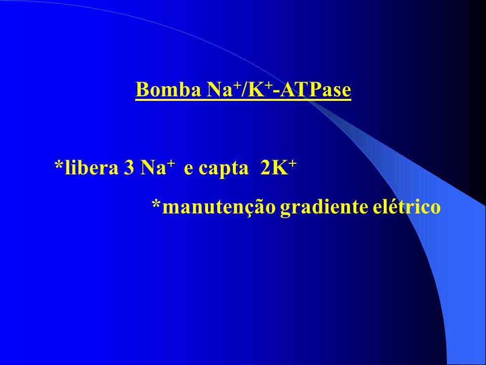 Bomba Na + /K + -ATPase *libera 3 Na + e capta 2K + *manutenção gradiente elétrico