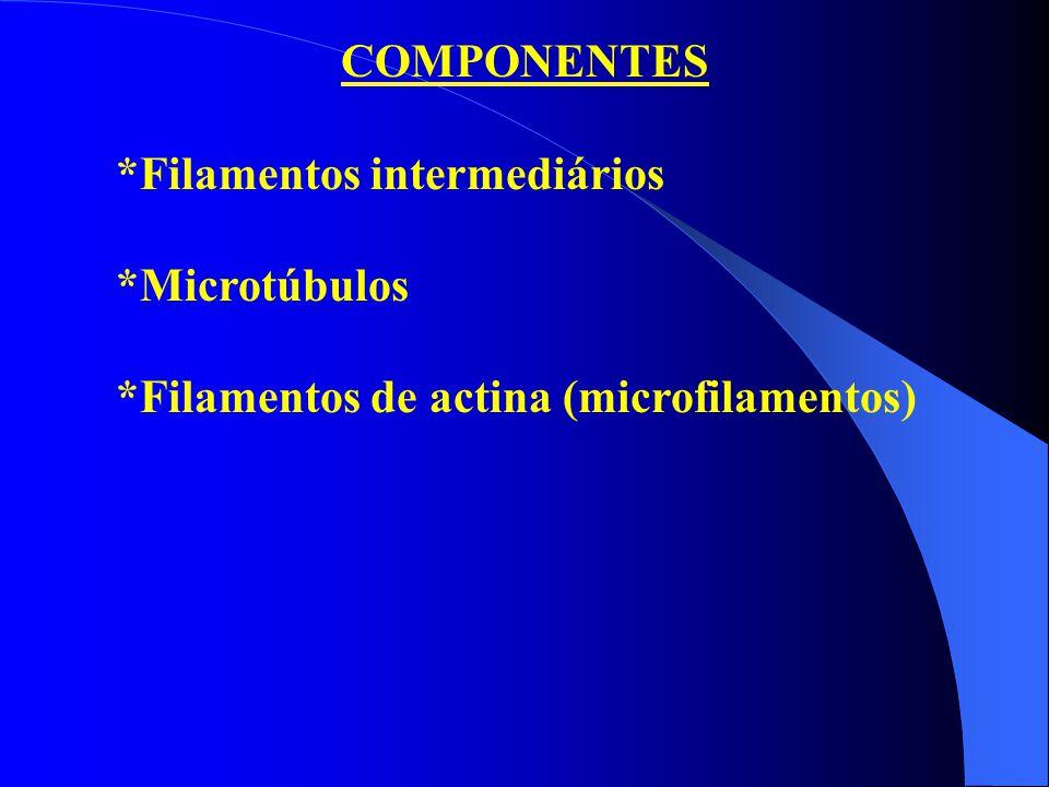 COMPONENTES *Filamentos intermediários *Microtúbulos *Filamentos de actina (microfilamentos)
