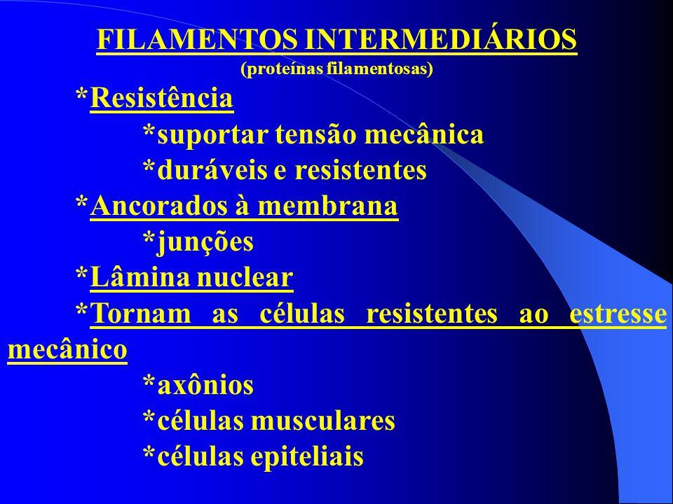 FILAMENTOS INTERMEDIÁRIOS (proteínas filamentosas) *Resistência *suportar tensão mecânica *duráveis e resistentes *Ancorados à membrana *junções *Lâmi