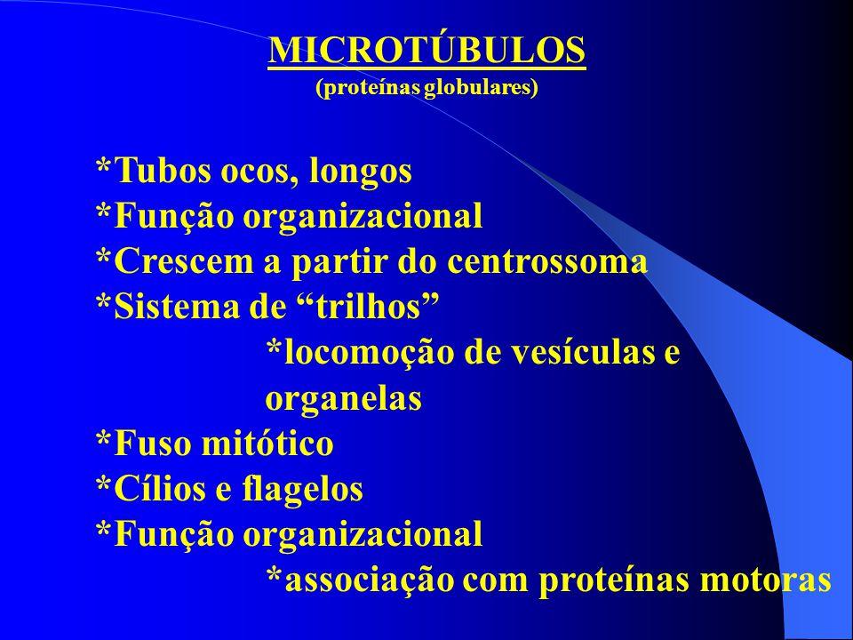 """MICROTÚBULOS (proteínas globulares) *Tubos ocos, longos *Função organizacional *Crescem a partir do centrossoma *Sistema de """"trilhos"""" *locomoção de ve"""