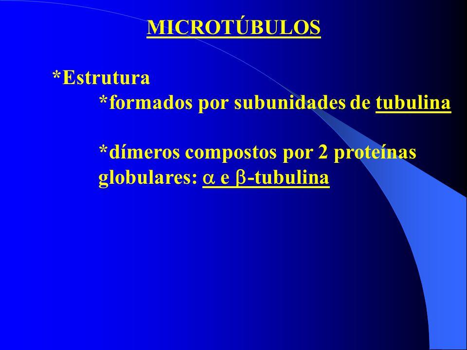 MICROTÚBULOS *Estrutura *formados por subunidades de tubulina *dímeros compostos por 2 proteínas globulares:  e  -tubulina