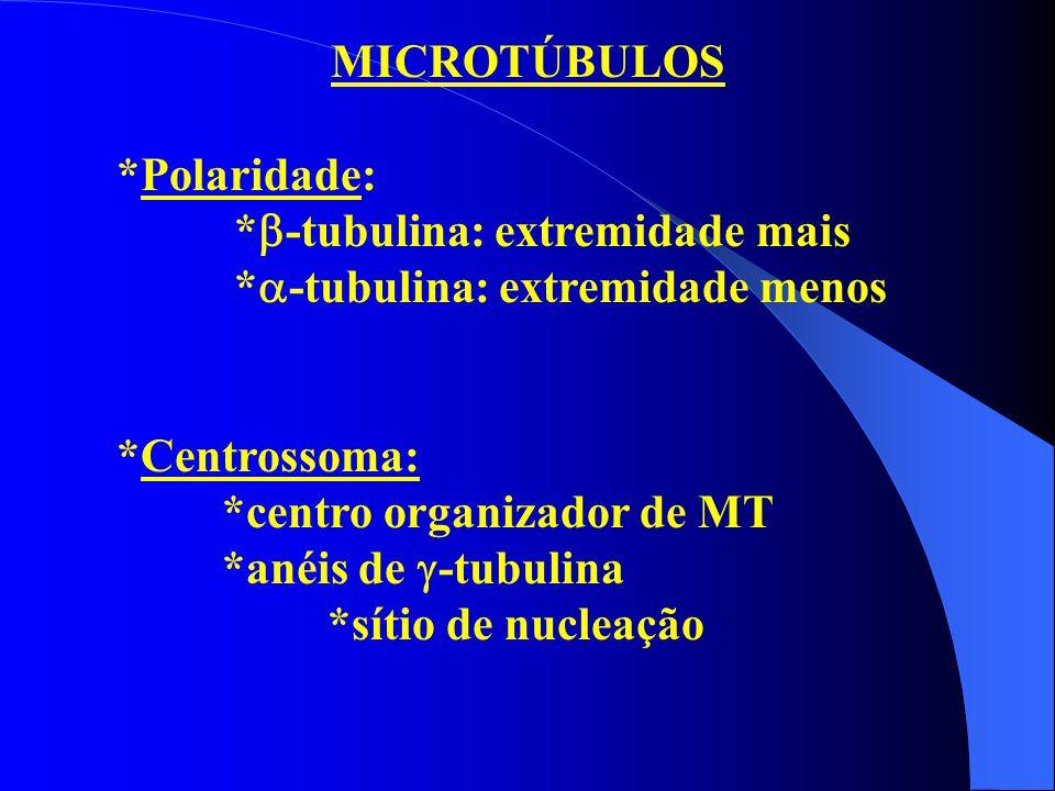 MICROTÚBULOS *Polaridade: *  -tubulina: extremidade mais *  -tubulina: extremidade menos *Centrossoma: *centro organizador de MT *anéis de  -tubuli