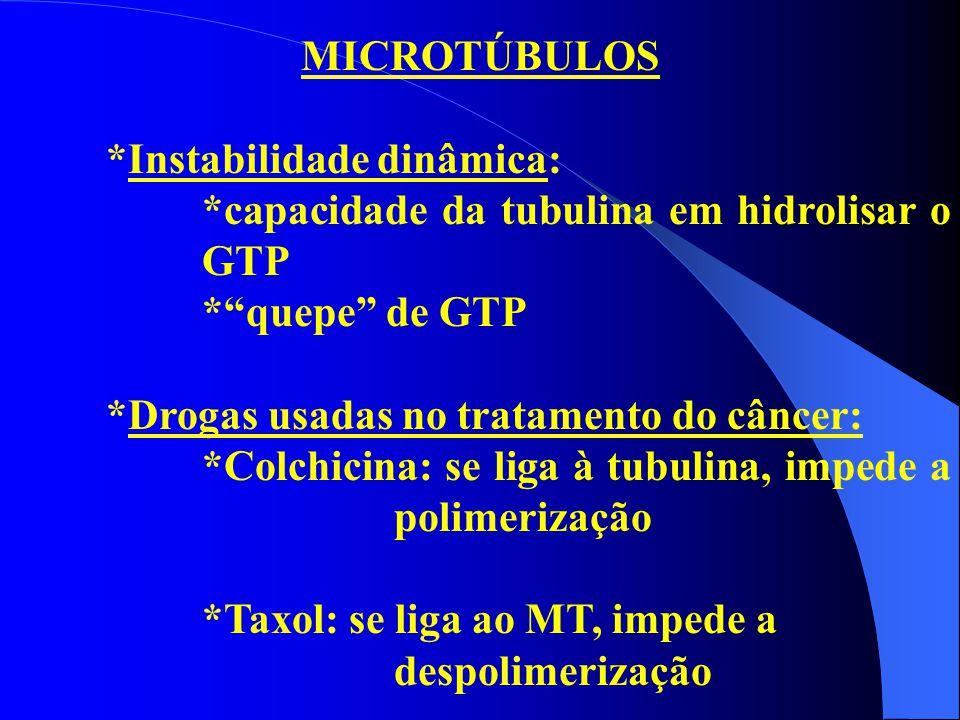 """MICROTÚBULOS *Instabilidade dinâmica: *capacidade da tubulina em hidrolisar o GTP *""""quepe"""" de GTP *Drogas usadas no tratamento do câncer: *Colchicina:"""