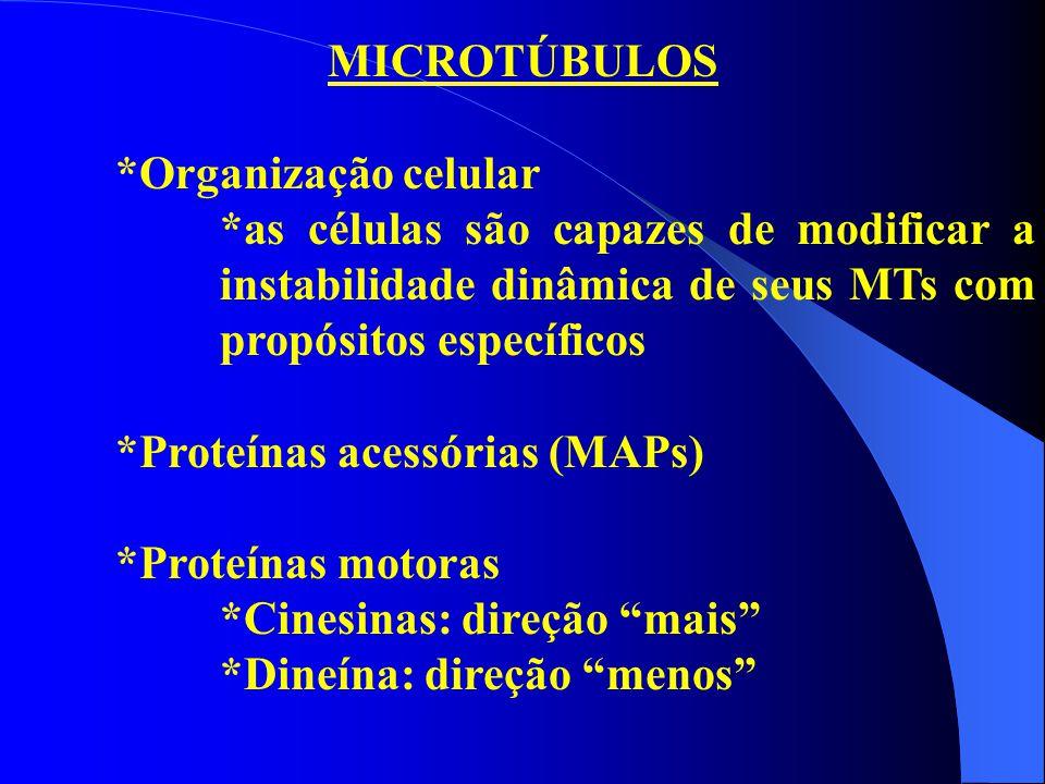 MICROTÚBULOS *Organização celular *as células são capazes de modificar a instabilidade dinâmica de seus MTs com propósitos específicos *Proteínas aces