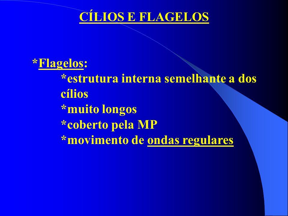 CÍLIOS E FLAGELOS *Flagelos: *estrutura interna semelhante a dos cílios *muito longos *coberto pela MP *movimento de ondas regulares