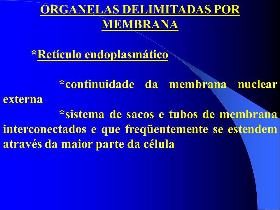 ORGANELAS DELIMITADAS POR MEMBRANA *Retículo endoplasmático *continuidade da membrana nuclear externa *sistema de sacos e tubos de membrana interconec