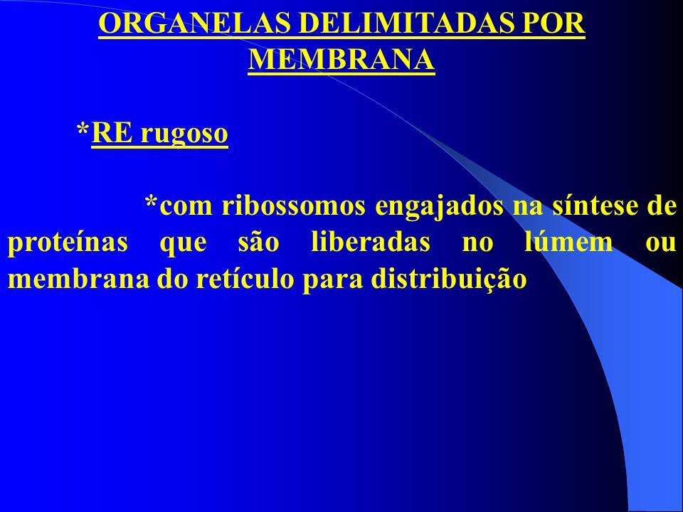 ORGANELAS DELIMITADAS POR MEMBRANA *RE rugoso *com ribossomos engajados na síntese de proteínas que são liberadas no lúmem ou membrana do retículo par