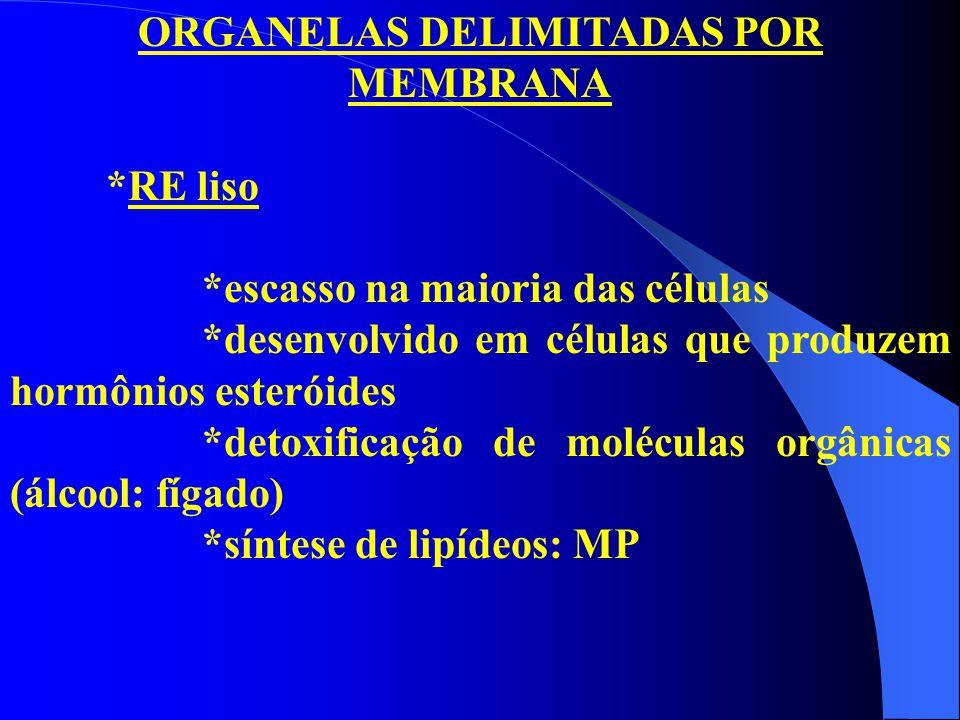 ORGANELAS DELIMITADAS POR MEMBRANA *RE liso *escasso na maioria das células *desenvolvido em células que produzem hormônios esteróides *detoxificação