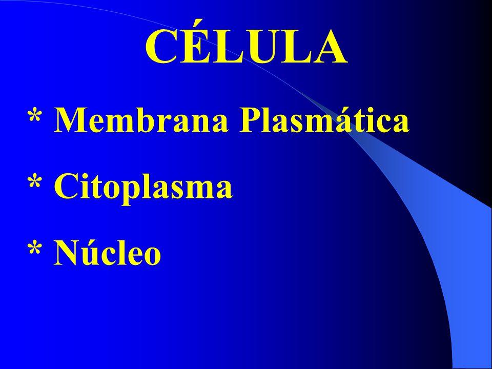 TIPOS DE TRANSPORTE *Através dos poros nucleares *citosol  núcleo *Através de membranas *citosol  organelas *Por vesículas: entre o sistema de endomembranas ***Seqüência sinal: 15 a 60 aminoácidos de comprimento.