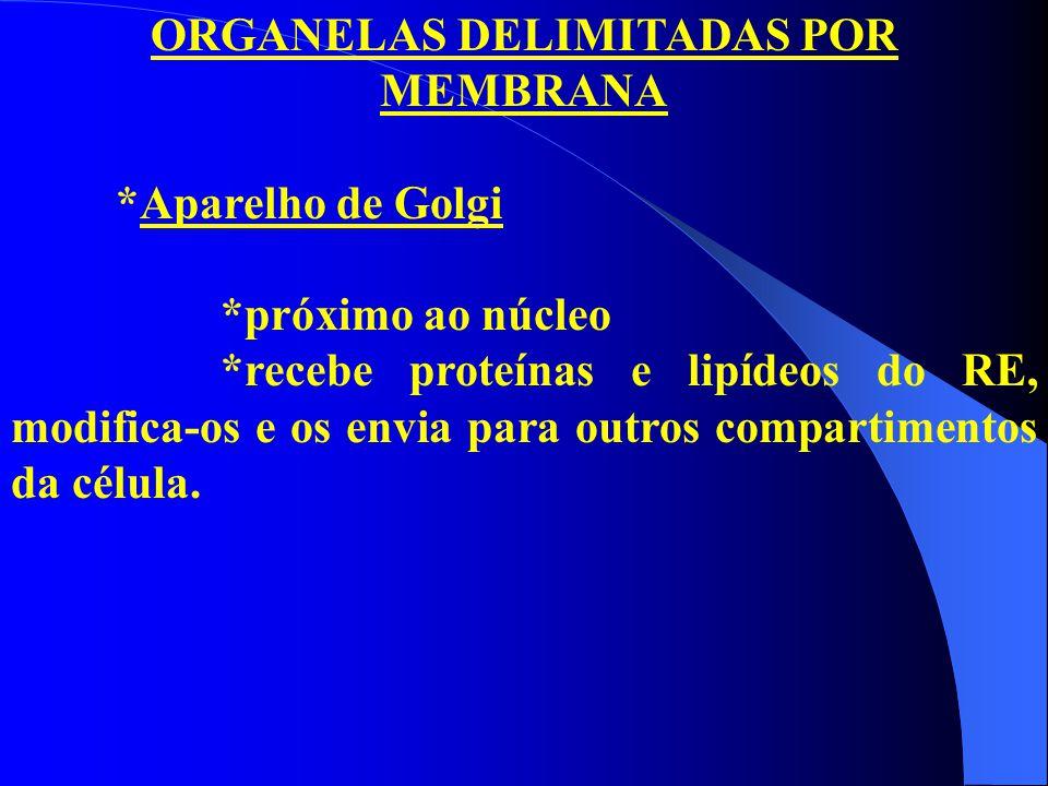 ORGANELAS DELIMITADAS POR MEMBRANA *Aparelho de Golgi *próximo ao núcleo *recebe proteínas e lipídeos do RE, modifica-os e os envia para outros compar