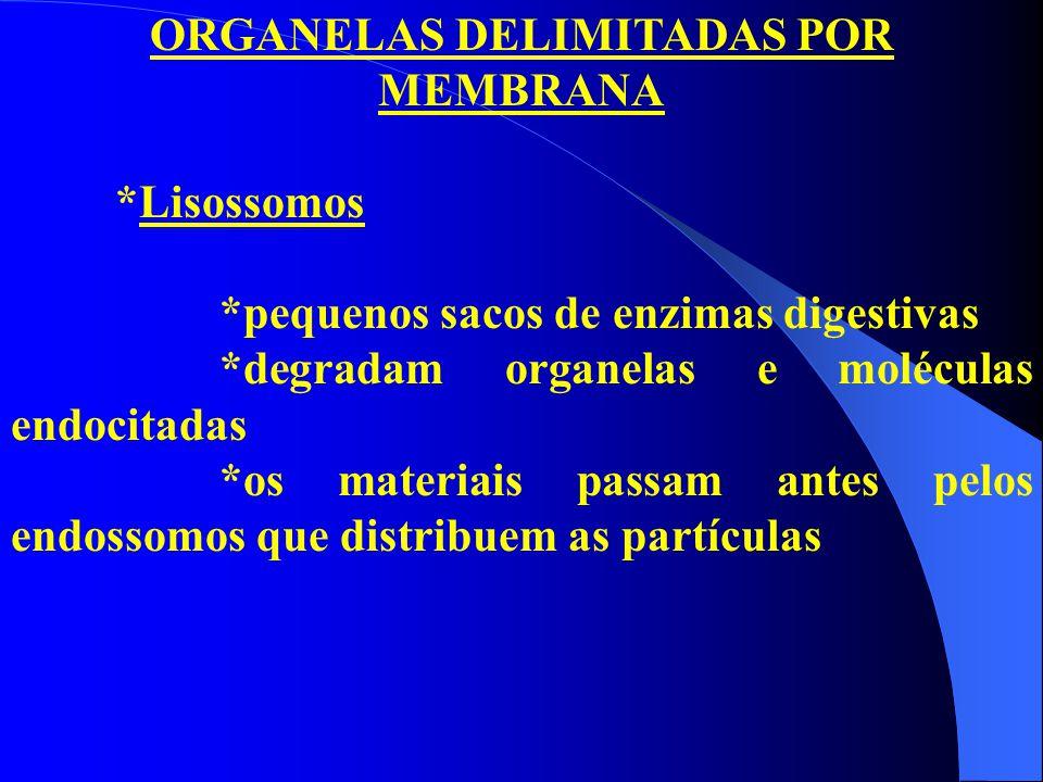 ORGANELAS DELIMITADAS POR MEMBRANA *Lisossomos *pequenos sacos de enzimas digestivas *degradam organelas e moléculas endocitadas *os materiais passam