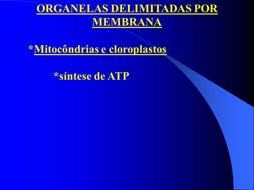 ORGANELAS DELIMITADAS POR MEMBRANA *Mitocôndrias e cloroplastos *síntese de ATP